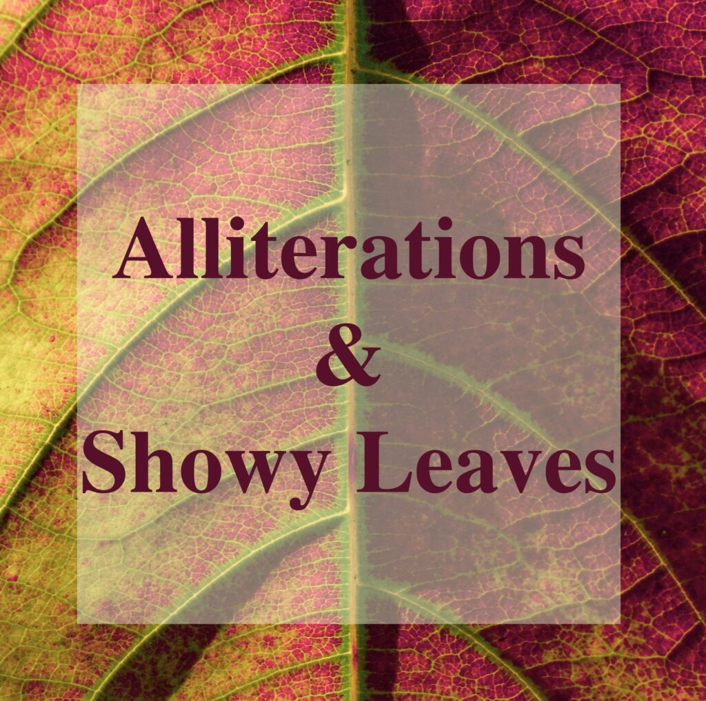 Alliterations and Showy Leaves